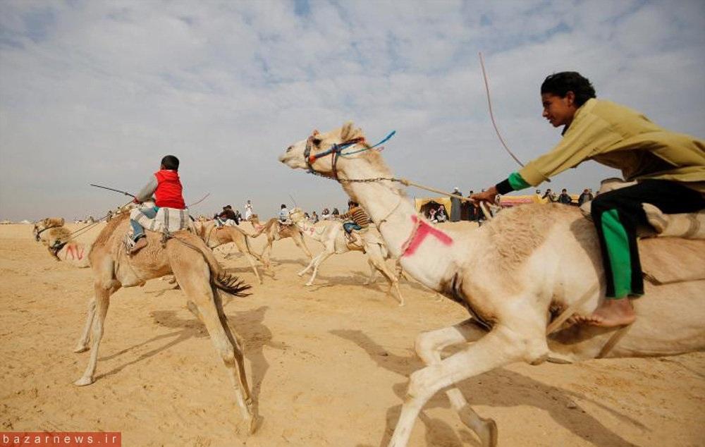از تصاویر جشن نوروز تا سوارکاری با شتر